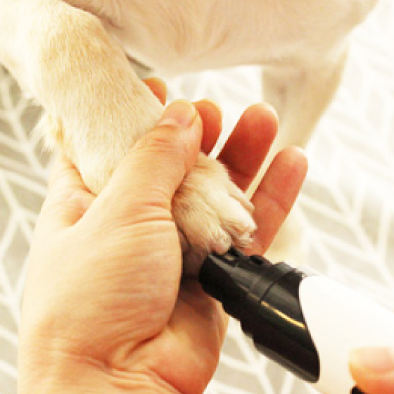 rechargeable professional dog nail grinder 16