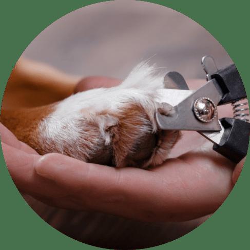 2-piece grooming kit 5
