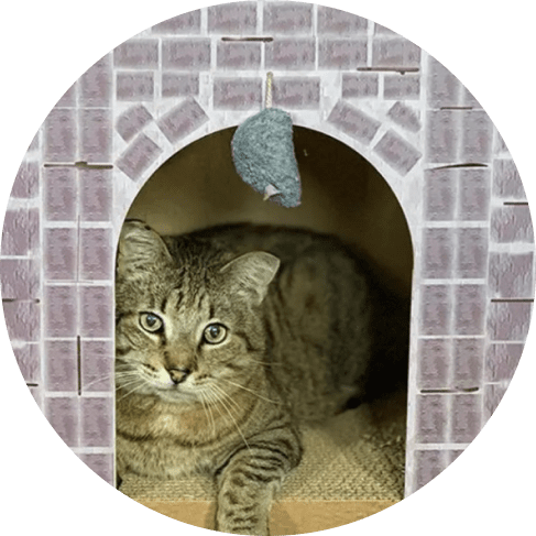 castle cat scratcher house 10
