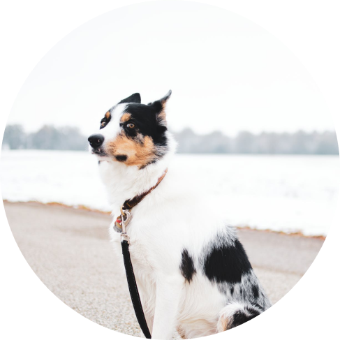 dog car seatbelt set (2pcs) 17
