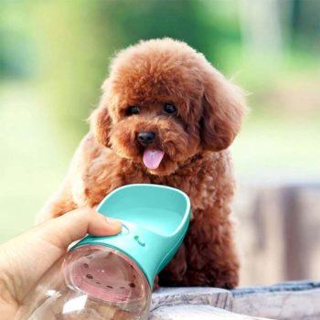 portable pet water bottle 12