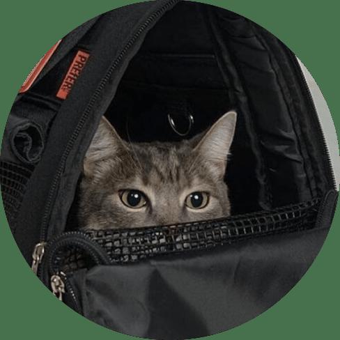 hideaway backpack - black 15