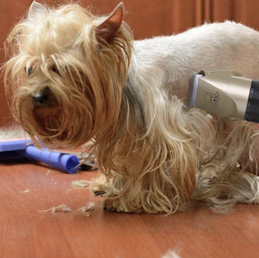 pet grooming tool 1